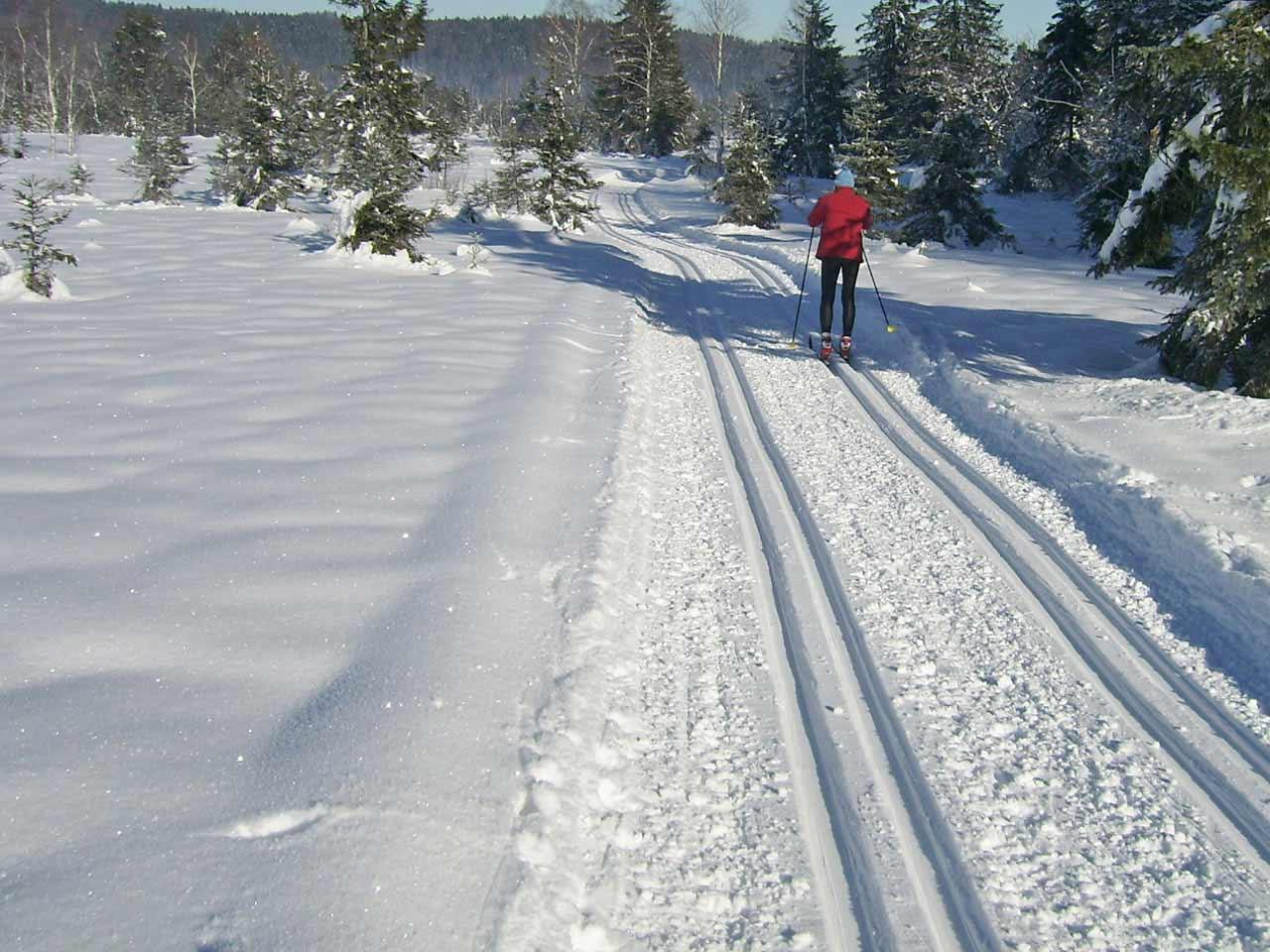 Langlauf im Kirchseemoor